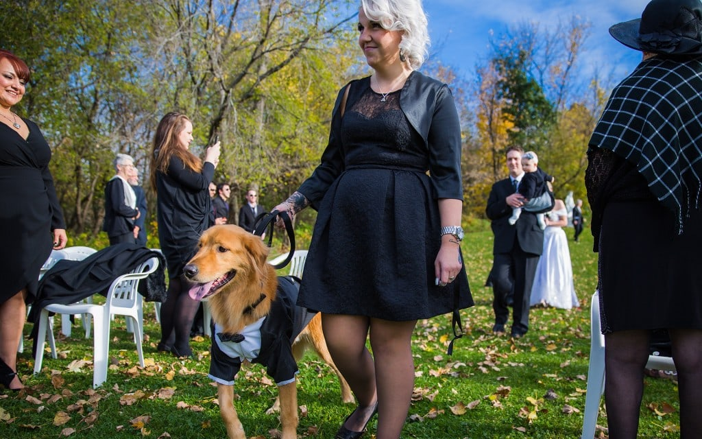 CC_bridal-party-dog